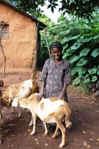 Ethiopia - Ebese and her sheep